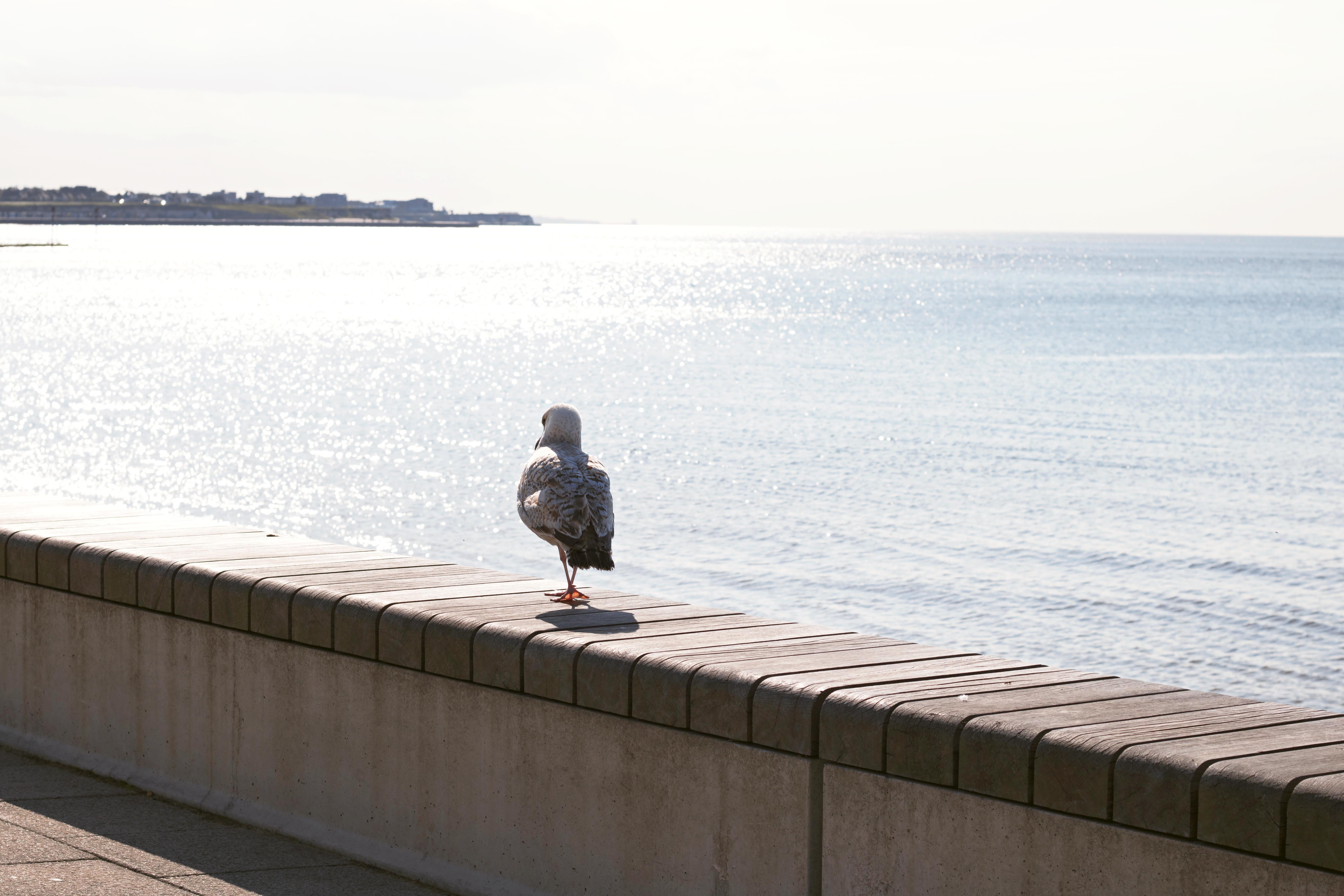 Costal Views Kent