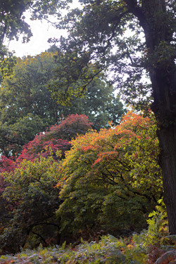 Walk in the Surrey Hills