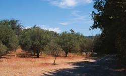 La Garde-Freinet Vineyard