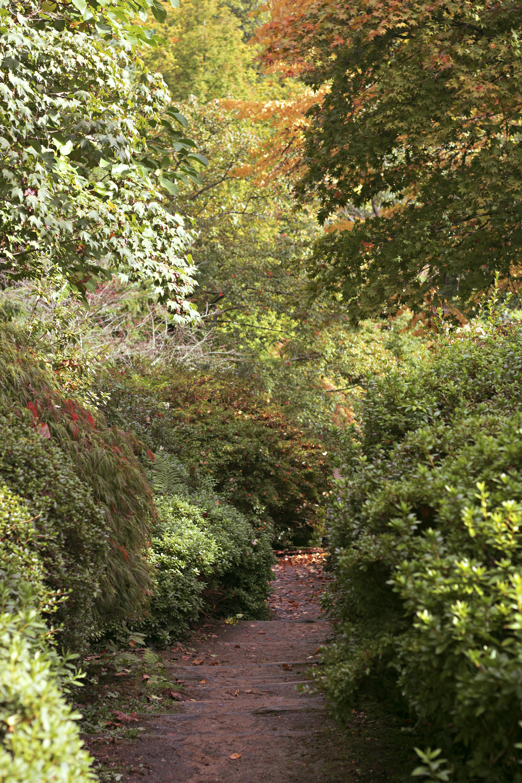 Magnolia Wood