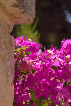 Beautiful Spanish Florals