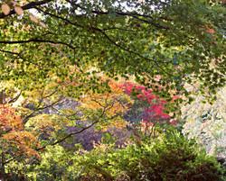 Autumnal Surrey Woodland Trees
