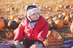 Surrey Family Photography Picking Pumpkins