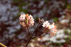 Spring Photography Surrey