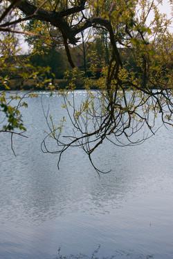 Goldsworth Lake Photography