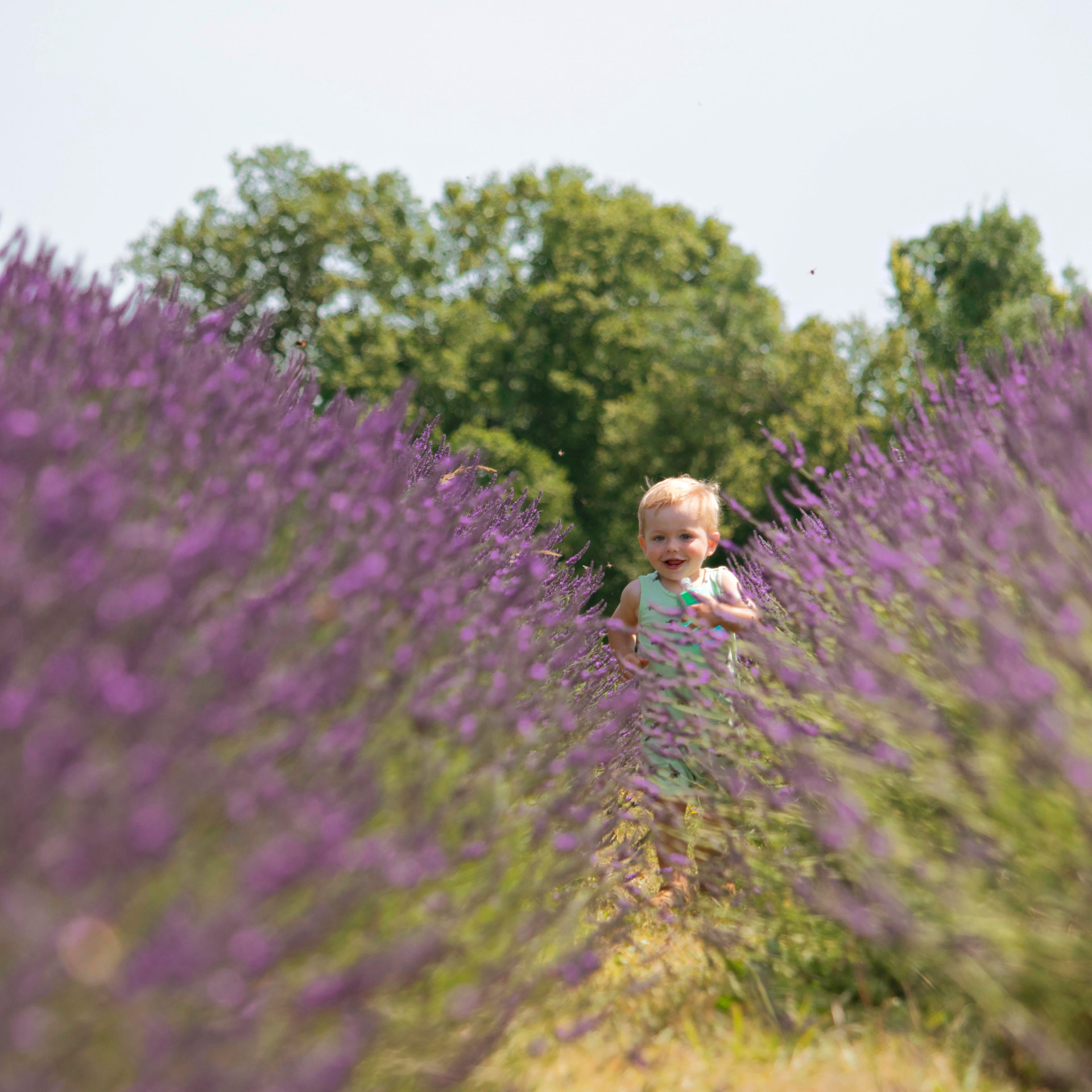 Candid Family Photography at the Lavender Fields