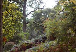 Nature in Surrey