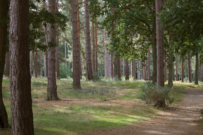 Woodland in Woking Surrey