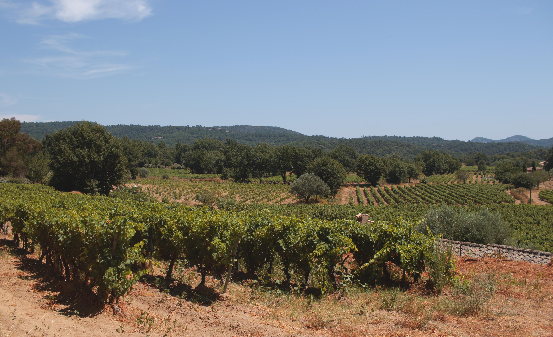 La Garde-Freinet Vineyard Landscape
