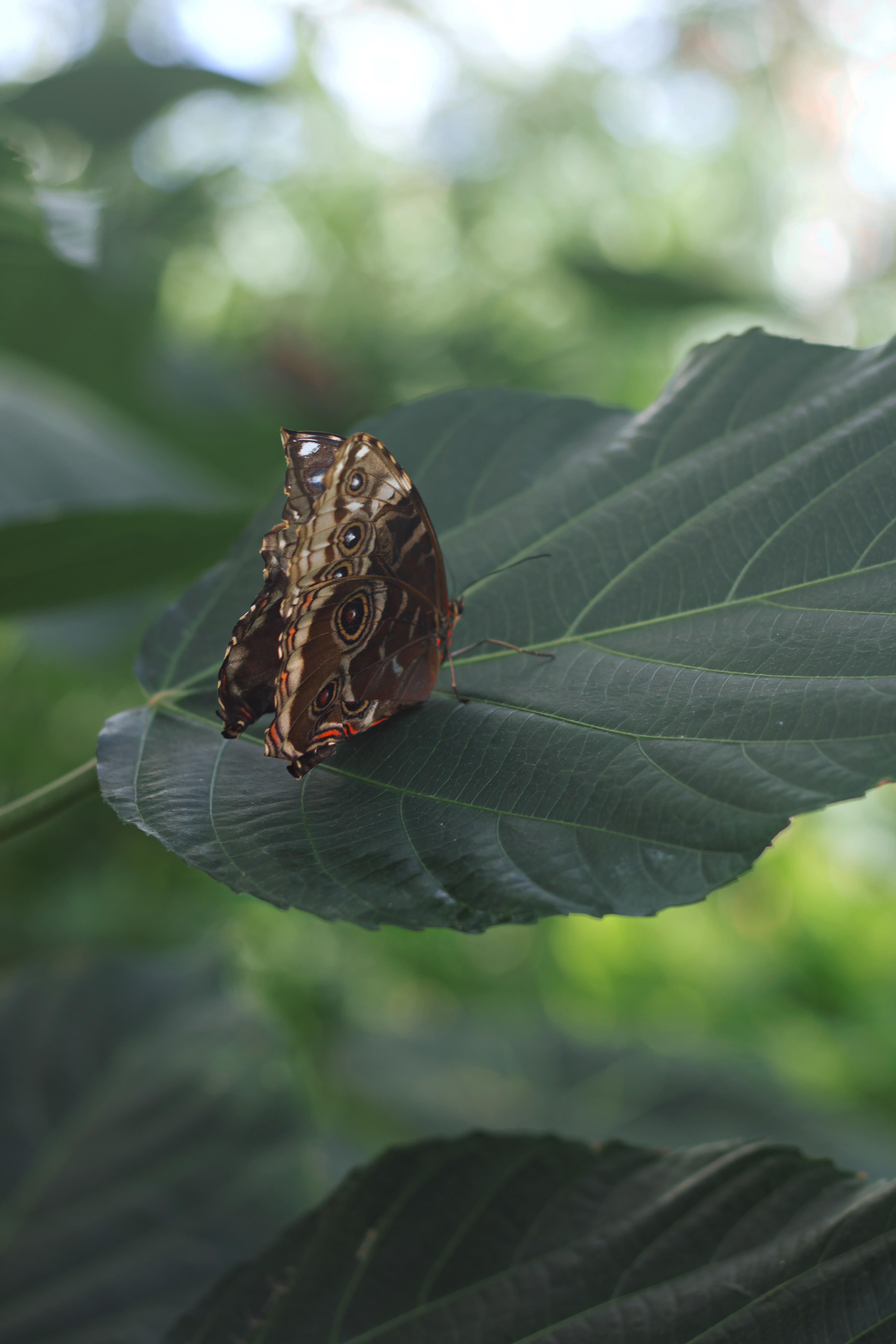 Butterfly At Wisley