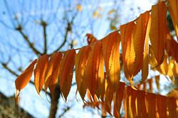 Autumnal Photography