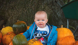 Pumpkins in Petersfields 2020
