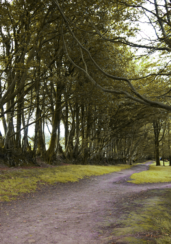 Woodland Photography at Quantock Hills