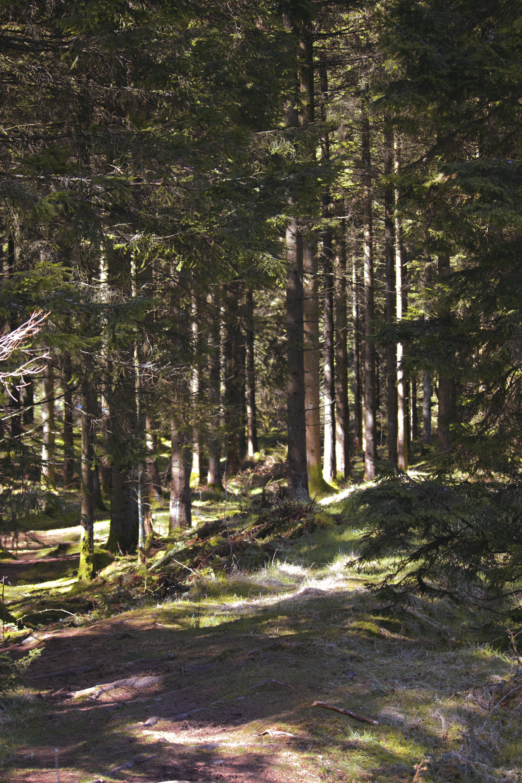 Mendip Woodlands