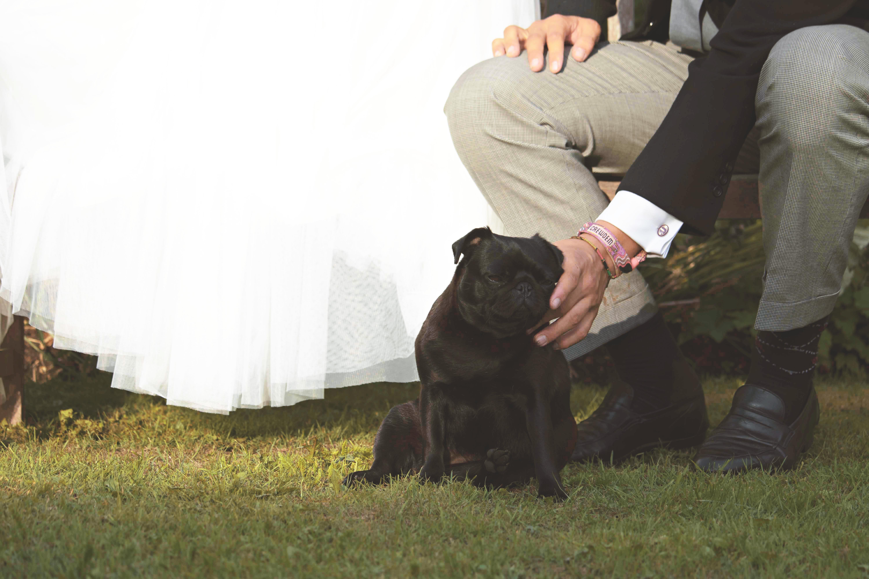 Animals At Weddings Dug The Pug