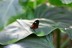 Wisley Gardens Butterflies