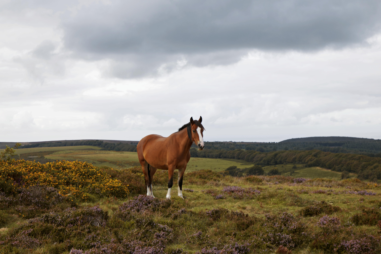 Horse at Quantock Hills