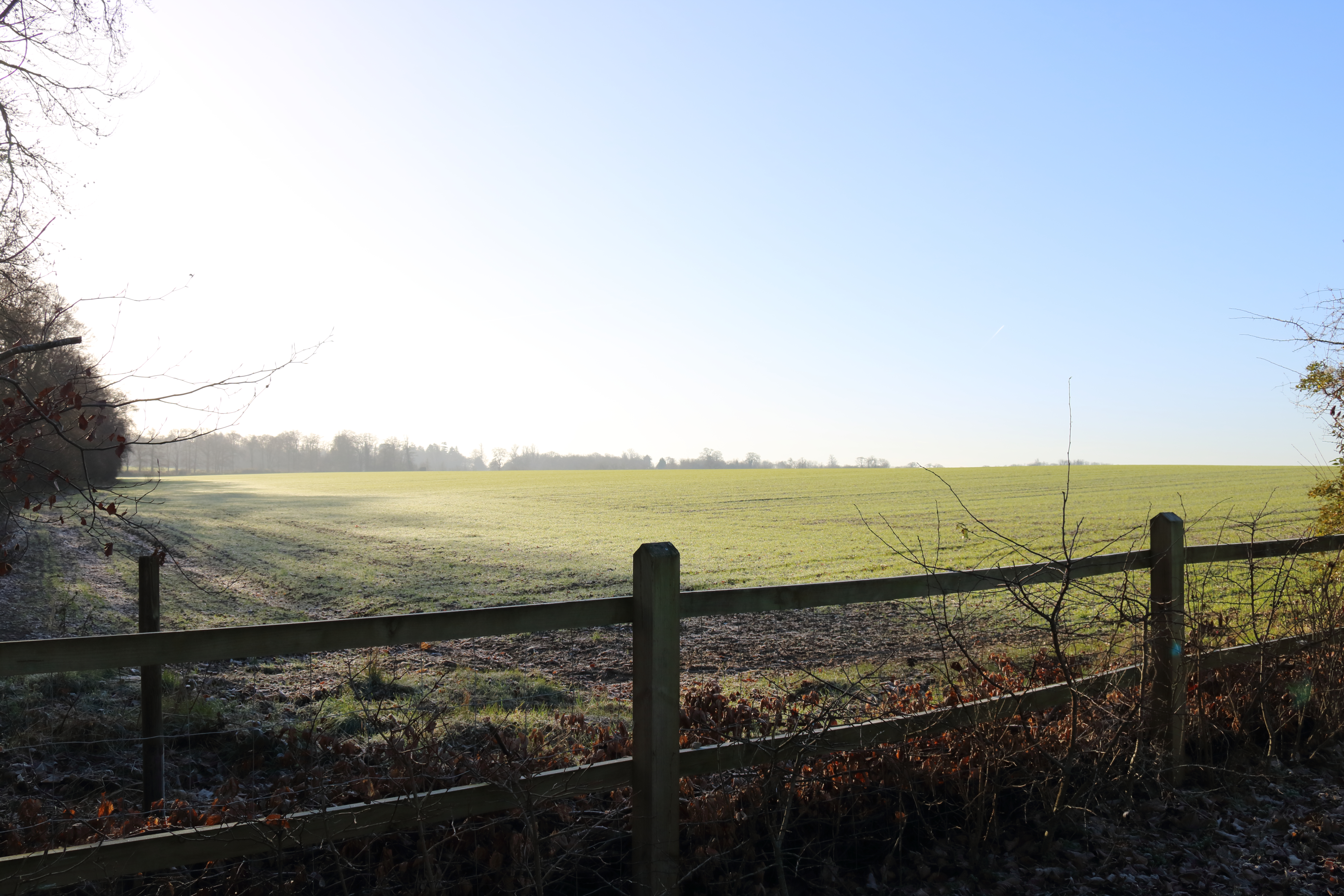 Nature Photography in Surrey in Winter