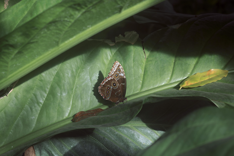 R.H.S. Wisley Garden Butterfly