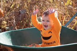 Surrey Pumpkin Family Portraits
