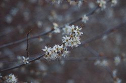 Blossom Wildlife Macro Photography