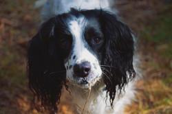 Pet Portrait in Mendip, Somerset