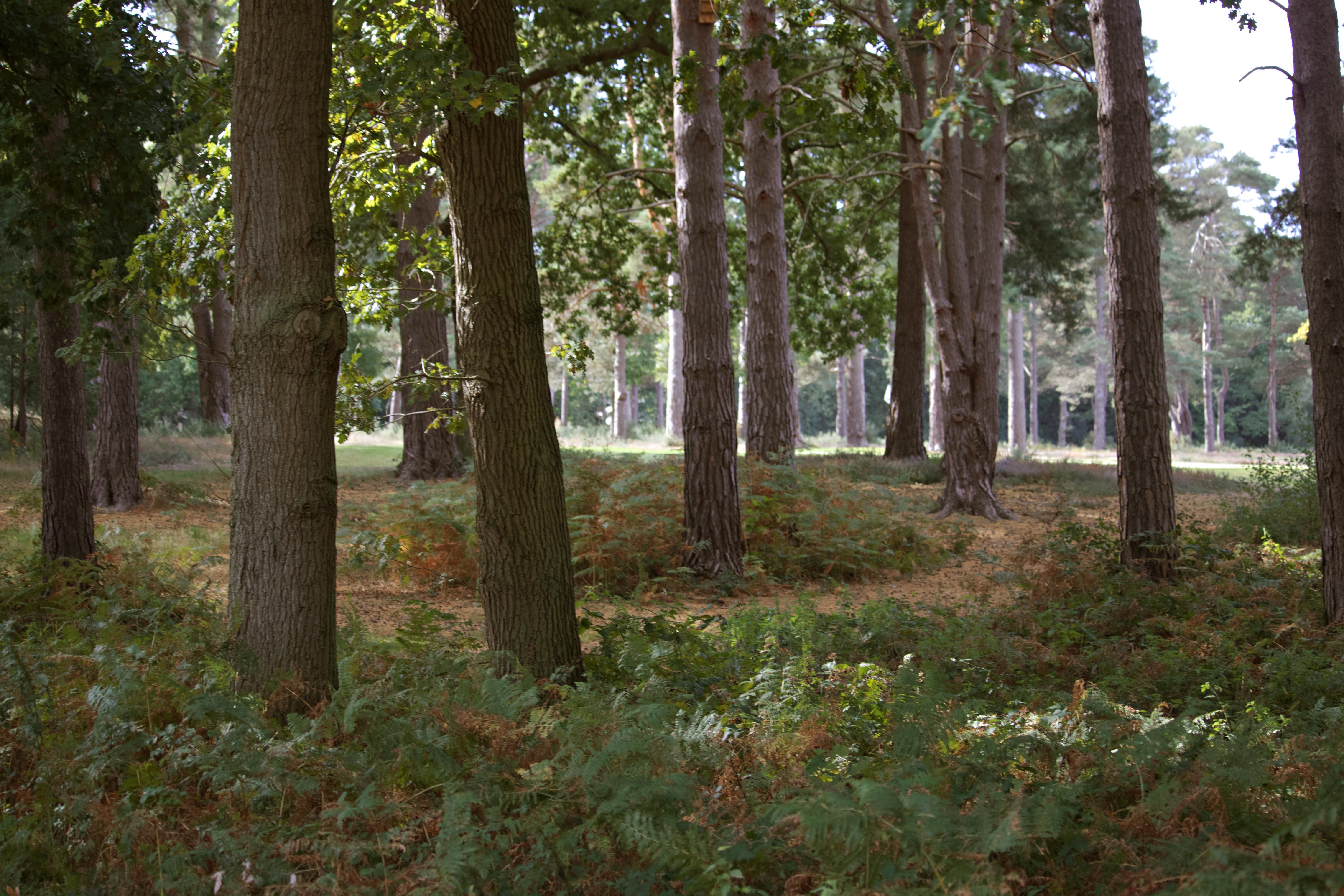 Woking Woodland