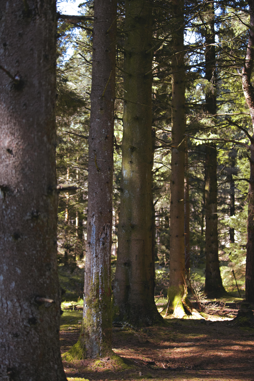 Mendip Woodland Photography