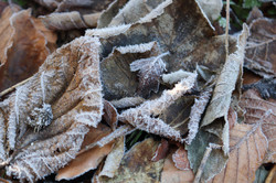 Winter Frost Macro Nature Photography