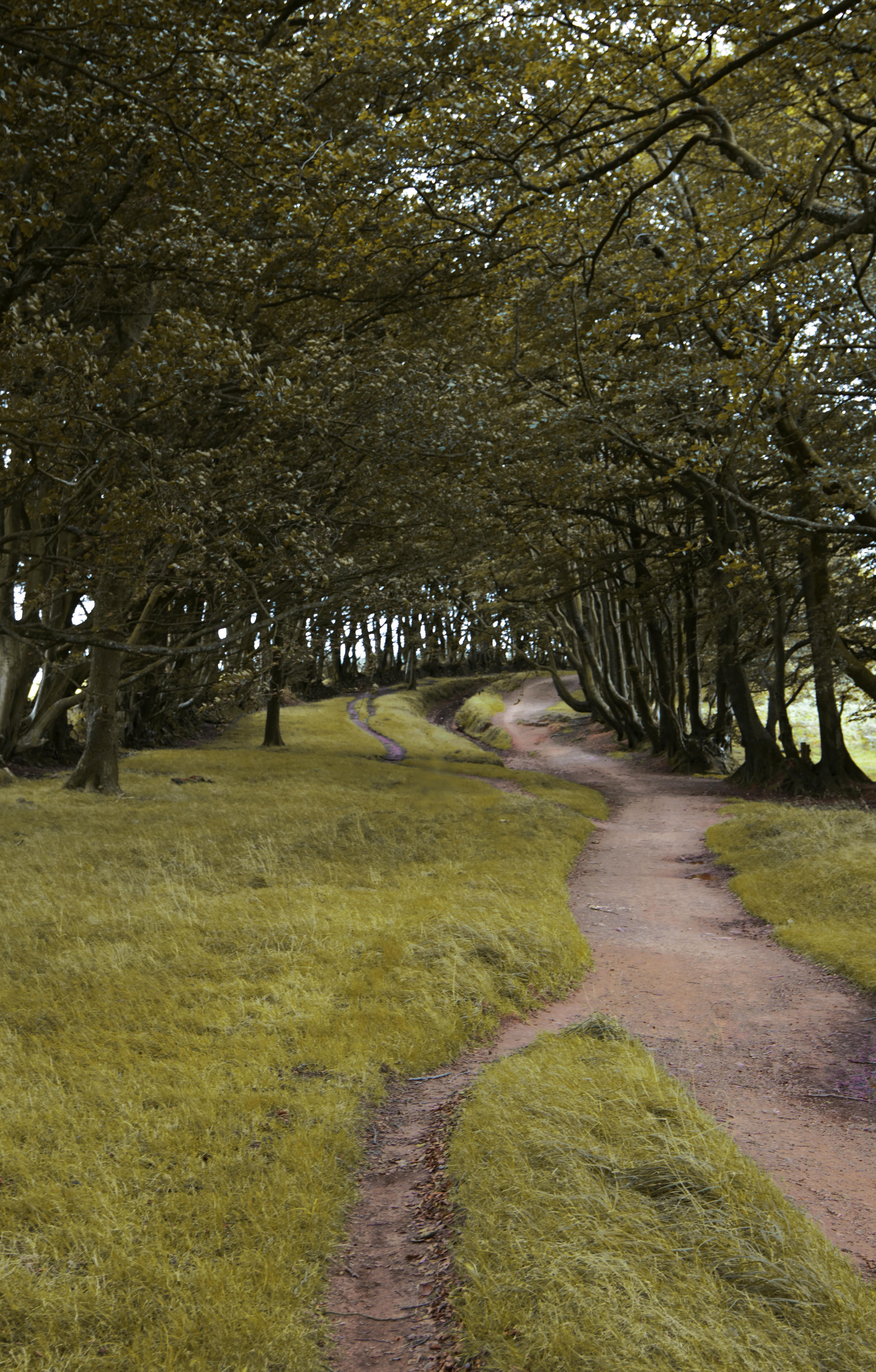 Gorgeous English Woodland