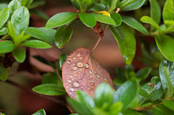 Raindrops on the Leaves