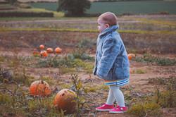Durleighmarsh Pumpkin Photography