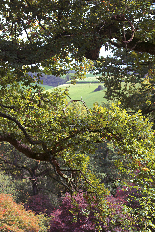 Surrey Hills Walk