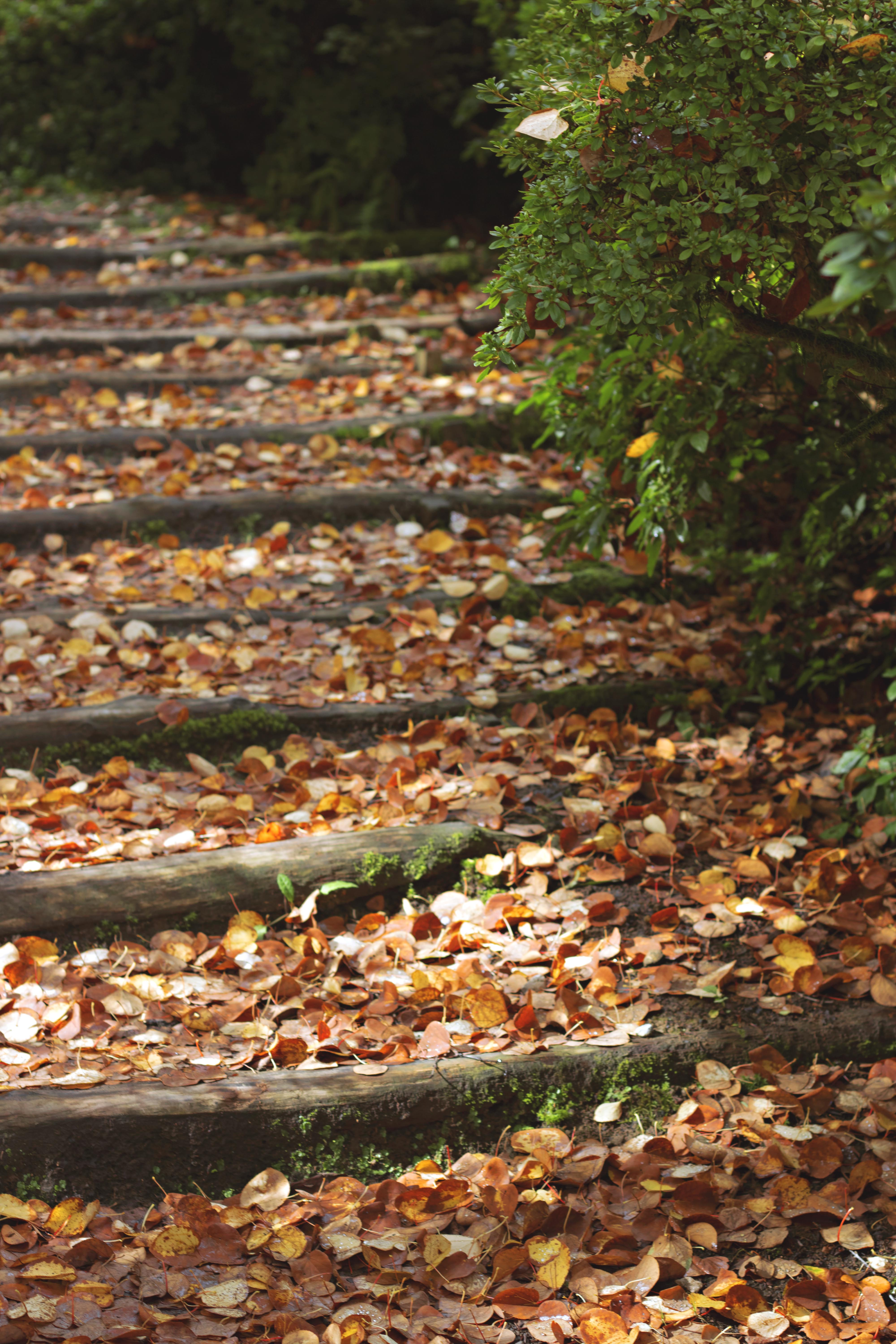 Fallen Leaves, Autumnal Walk, Surrey