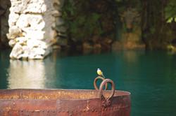 Euridge Manor Bird on the Lake