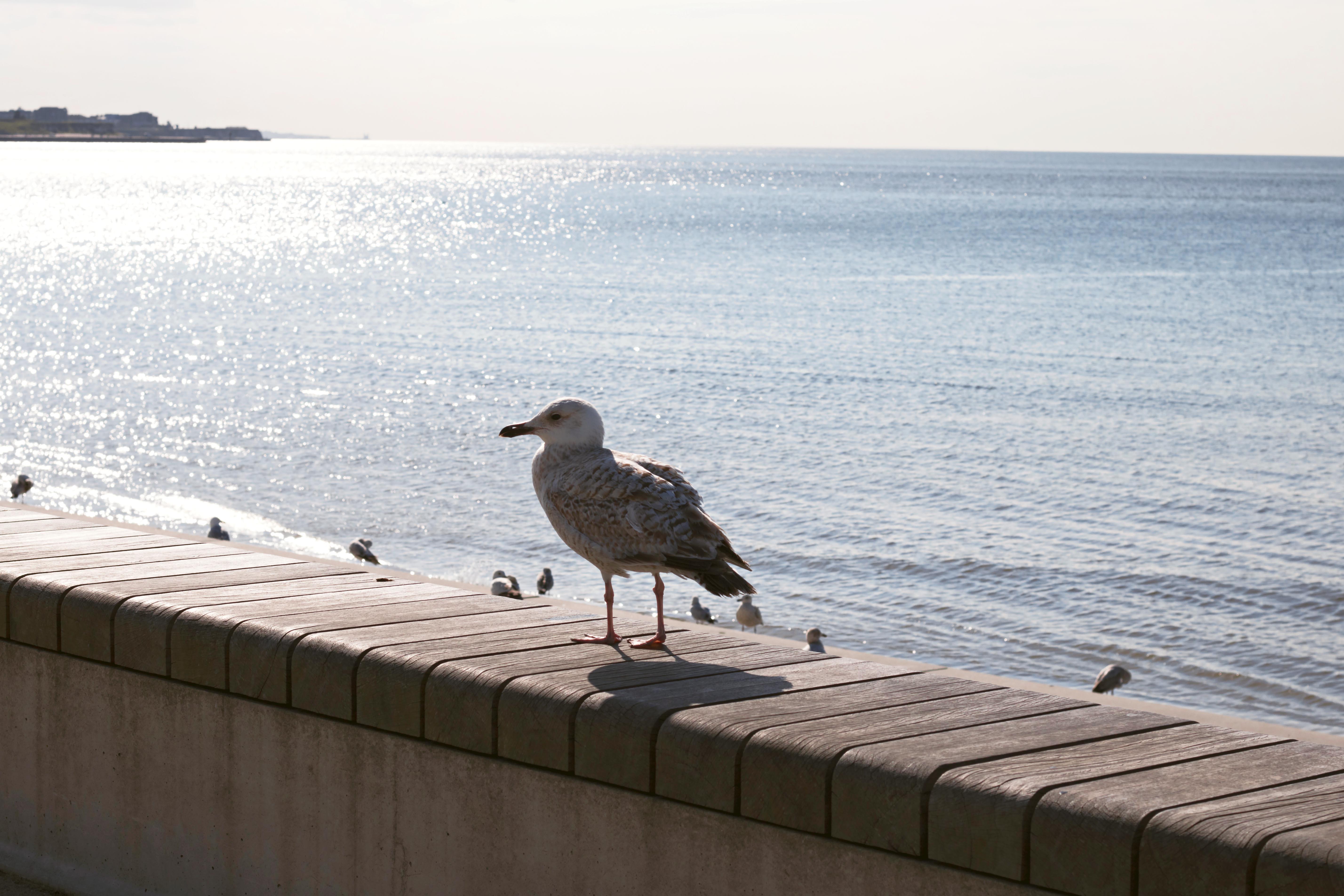 Wildlife Seaside Photography