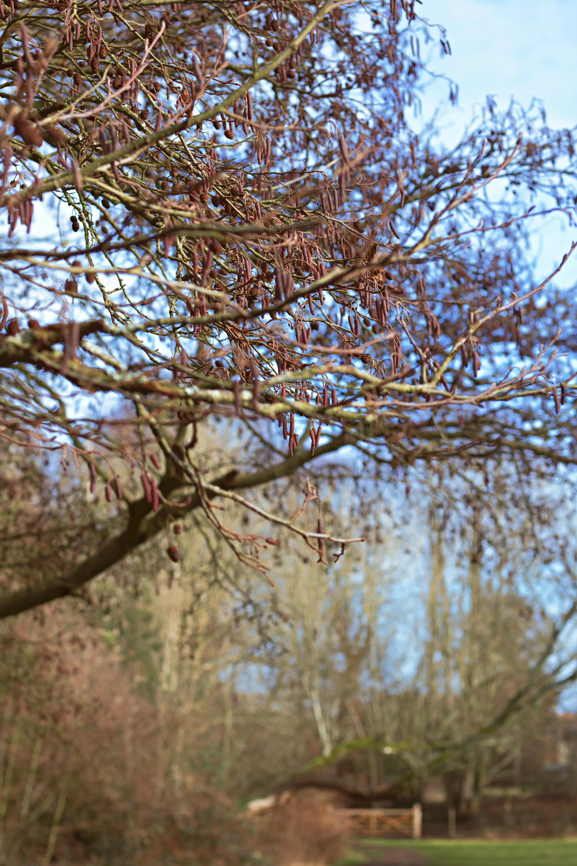 A Walk In Shere, Surrey