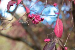 Nature & Landscape Photographer Surrey