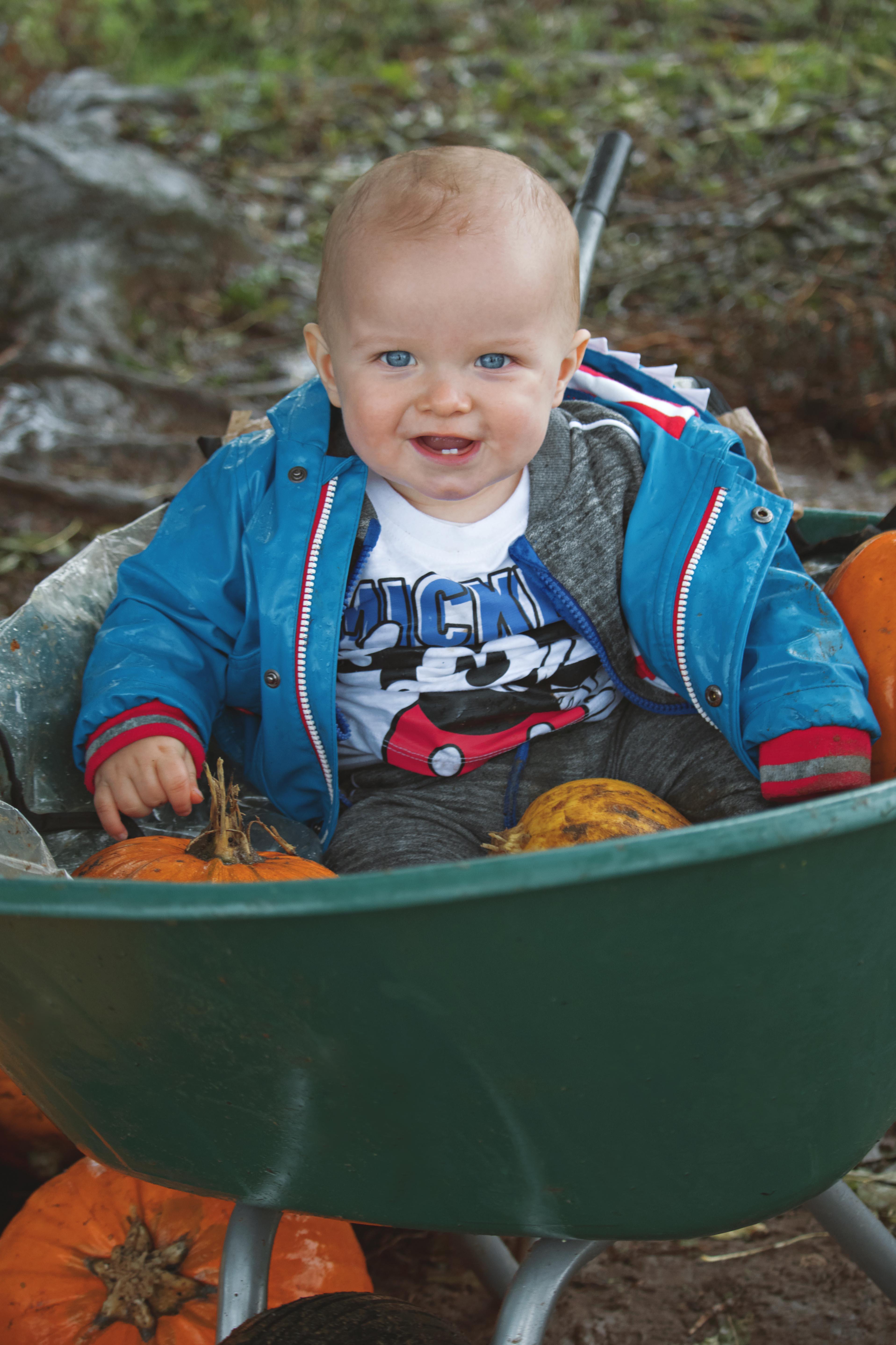 2020 Pumpkin Field Photography in Surrey