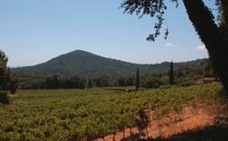 La Garde-Freinet Landscape