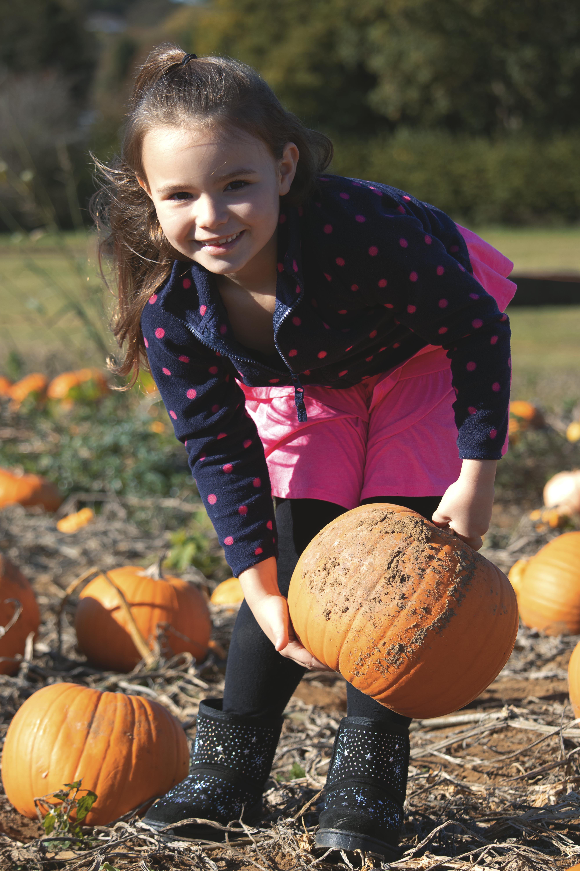 Rogate Pumpkin Patch