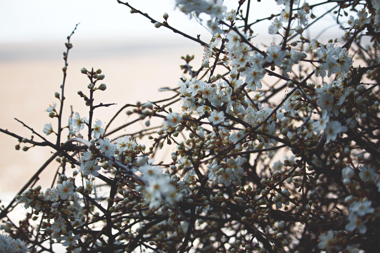 Macro Blossom Photography
