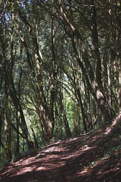 Forrest Walk Somerset Natural Light