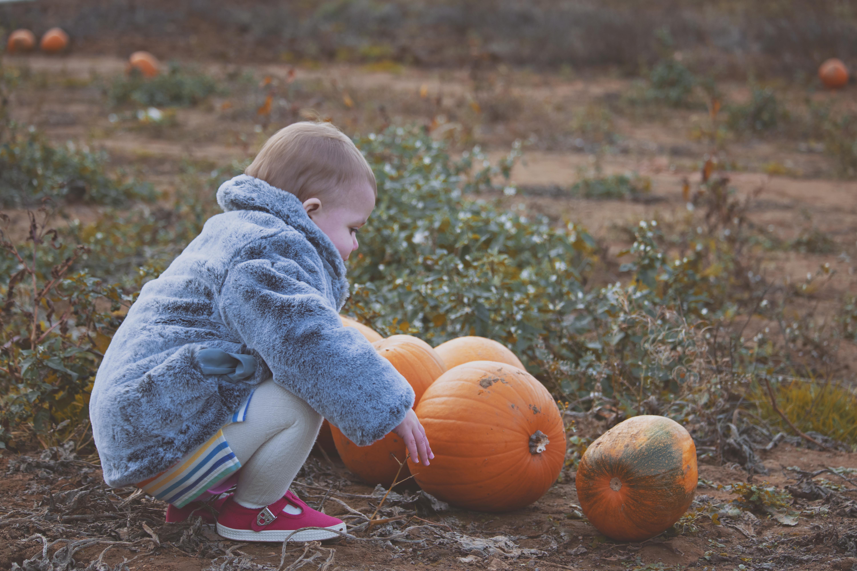 Durleighmarsh Pumpkin Photographer