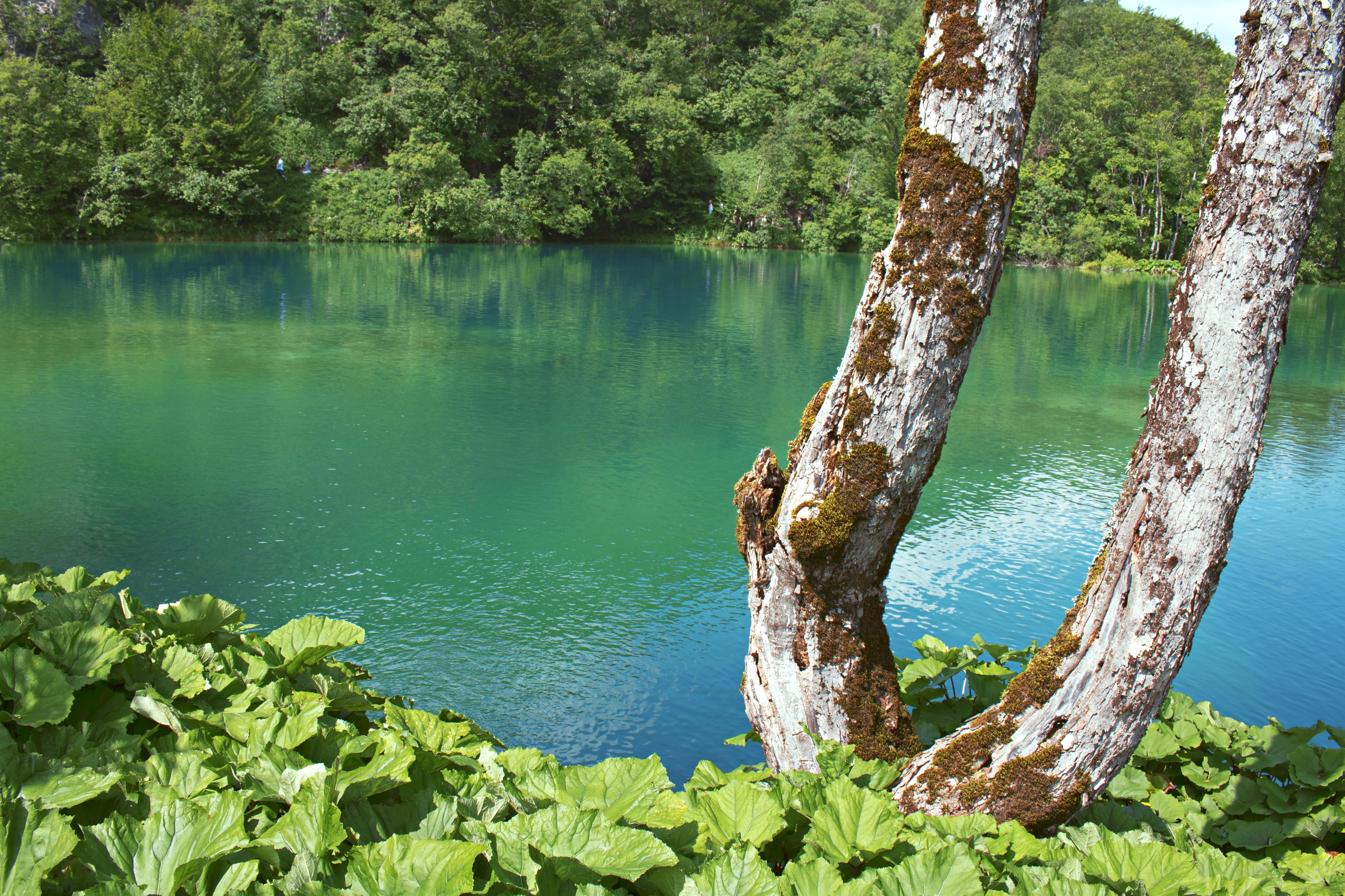 Stunning Water at Plitvice Lakes