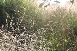 English Nature Photography