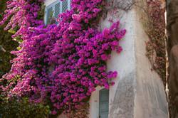 South of France Landscape