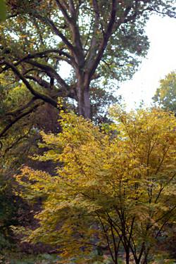 Ocher Trees