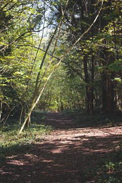 Beautiful Summer Woodland Walk SouthWest England