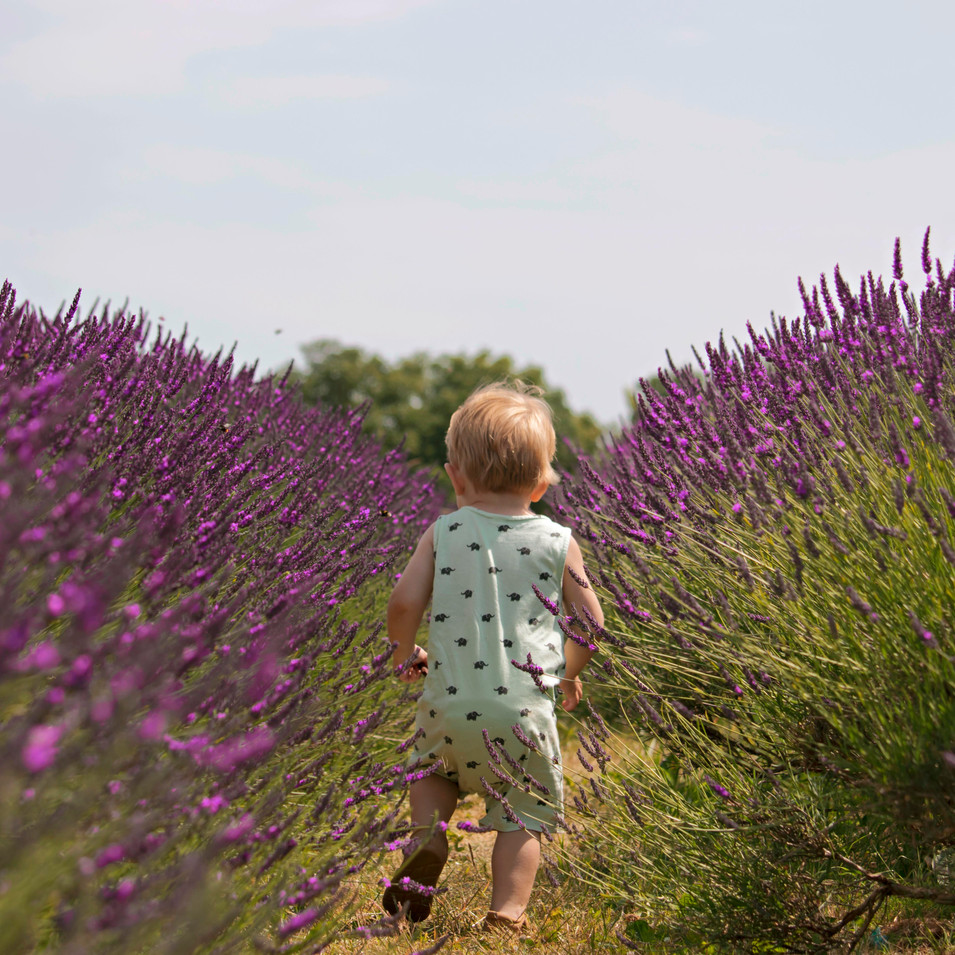 Candid Family Photography at the Lavender Fields in Surrey